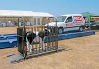 Пример использования весов Эльтон на выставке для определения веся теленка. фото #19